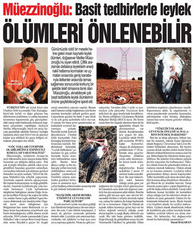 (Turkish) Müezzinoğlu: Basit tedbirlerle leylek ölümleri önlenebilir