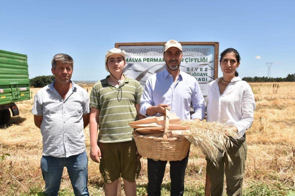 Silivri Belediye Başkanı Volkan Yılmaz Çiftliğimizde Siyez (Ata) Buğdayı Hasadına Katıldı